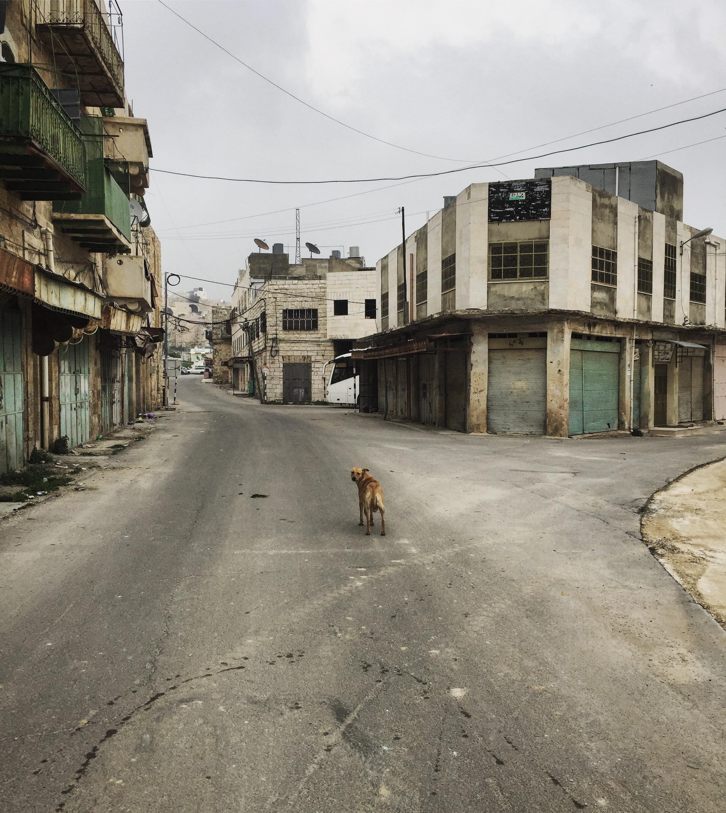 Hebron - Al Shuhada street [no-mans land] (2)